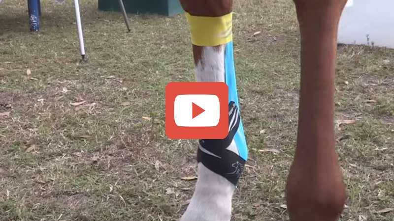 Suspensory Ligament & Tendon Support Taping - The Horse in Motion